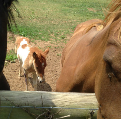 Foal and protectors. Photo taken during hike along Double Springs Rd. NE.