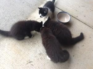 cats Lady 3