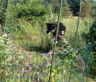 kitten on bush