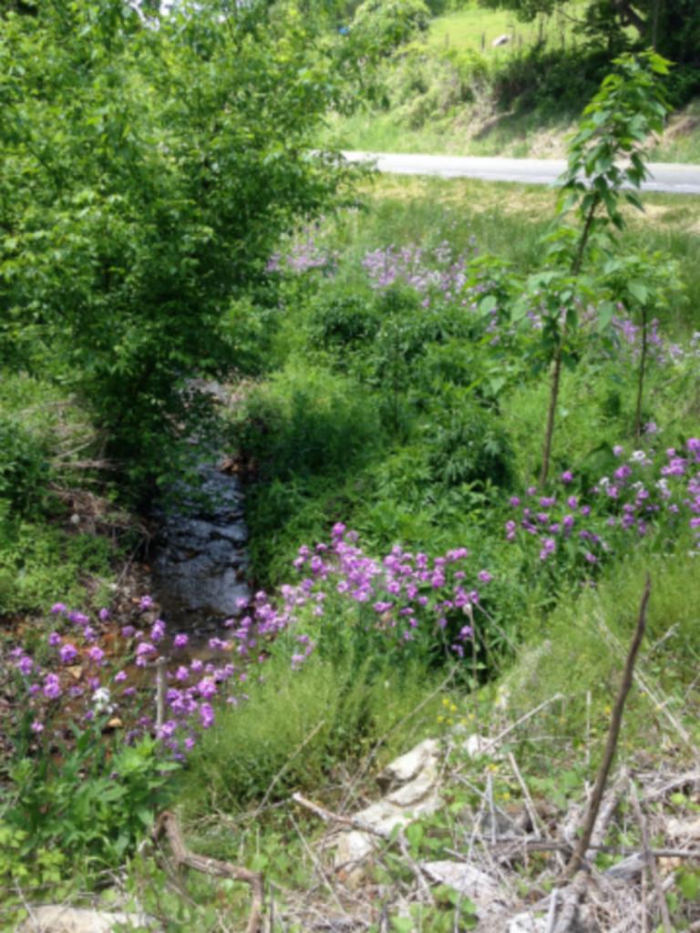 flowers ditch Pixlr