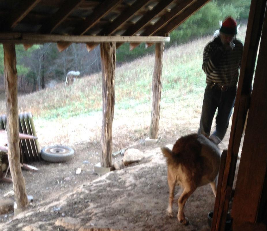 Gralla Ed & goats