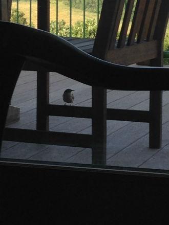 bird under chair